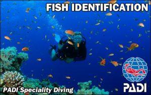 Fish ID