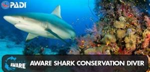 AWARE Shark Conservation