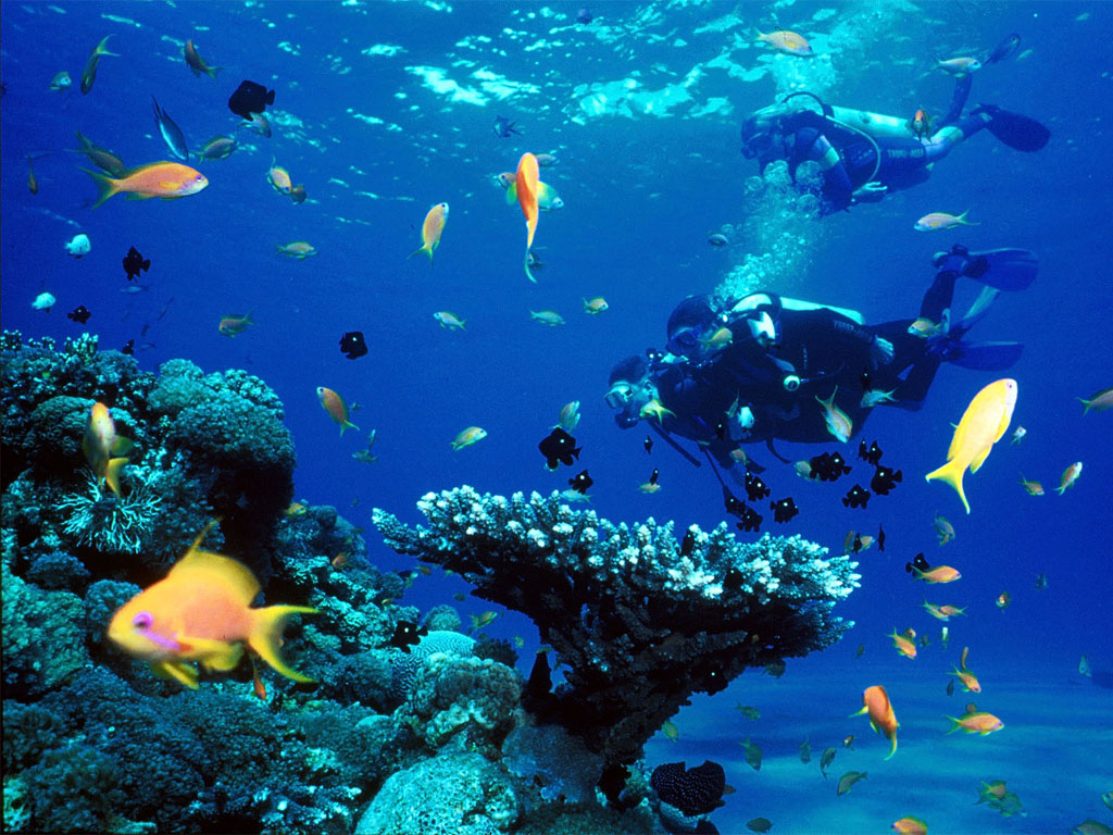 Experience Paradise in Bonaire