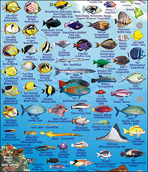 Fish ID Card